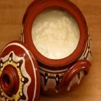 Bulgarian Yogurt